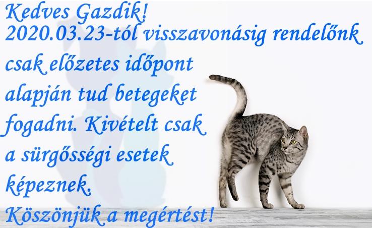 cats_52jpg