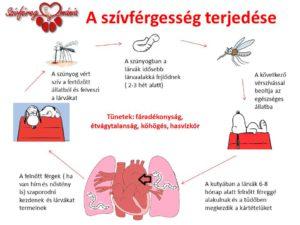 A-szívférgesség-terjedése-újlogo